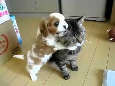Happy Caturday - Hug Your Cat!