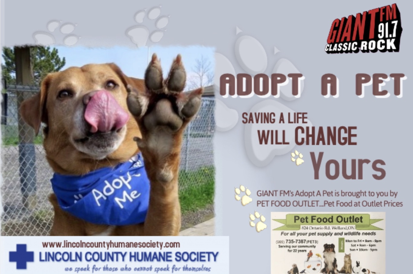 Adoptable Pet of the Day