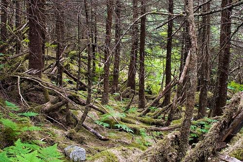 Great Bear Rain Forest Legislation