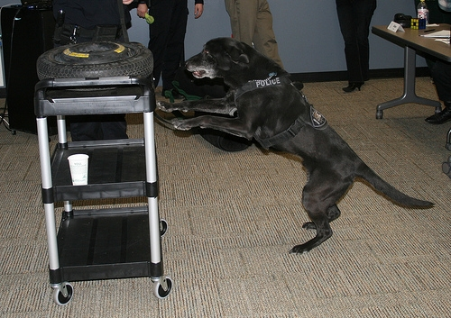 RCMP Drug Sniffing Dogs