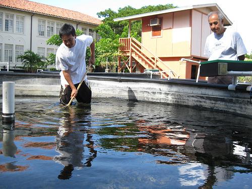 Aquaculture Diploma