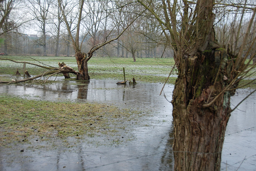 BC Flooding