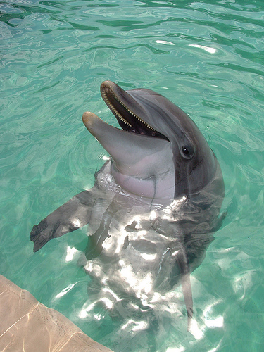 Ban on Cetaceans