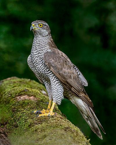 Threatened Birds