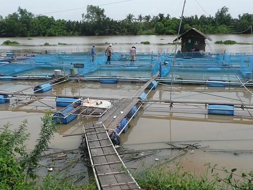 BC Fish Farms