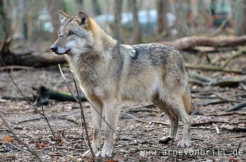State Representative Tom Tiffany Calls For Wolf Delisting