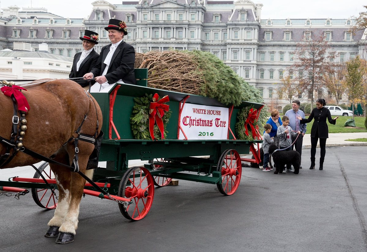 Oconto County Christmas Tree Arrives At The White House (Video)