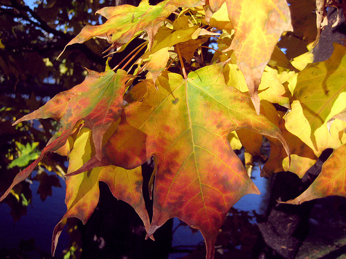 Shawano Leaf Collection Continues Through 11/17