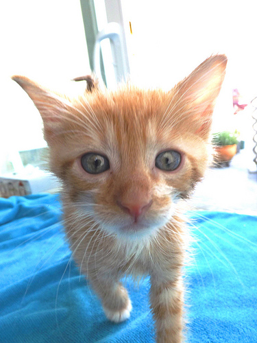 Cats & Kittens available for free adoption