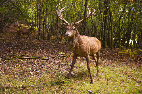 DNR looks to use different terminology for CWD