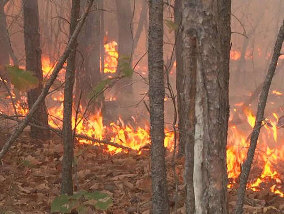 Wildfire Danger on the Rise