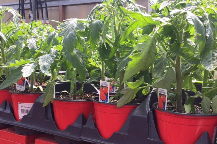 Be consistent: garden expert on keeping plants alive in heat