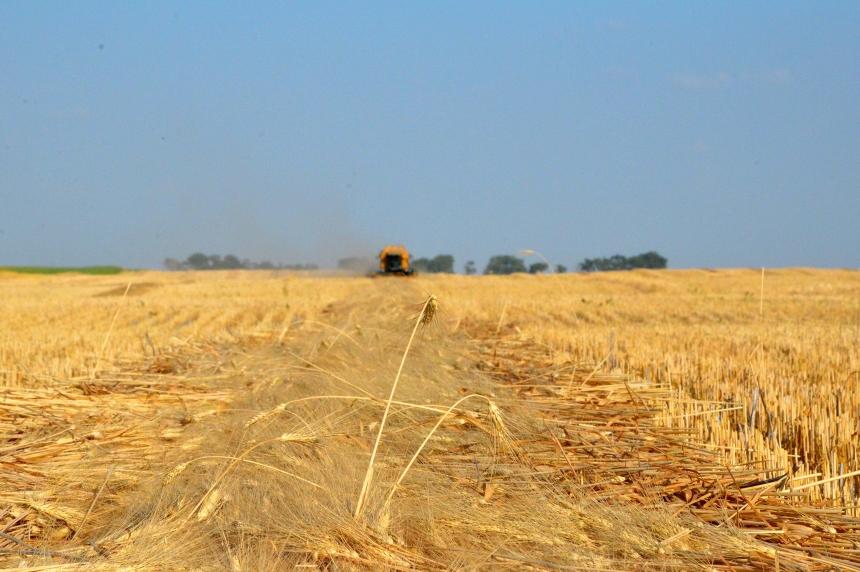 Crop report: significant rain needed across Saskatchewan
