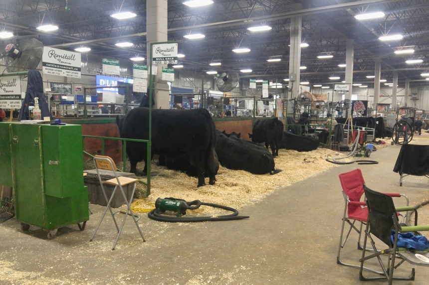 Despite lower attendance 2016 Agribition breaks several records