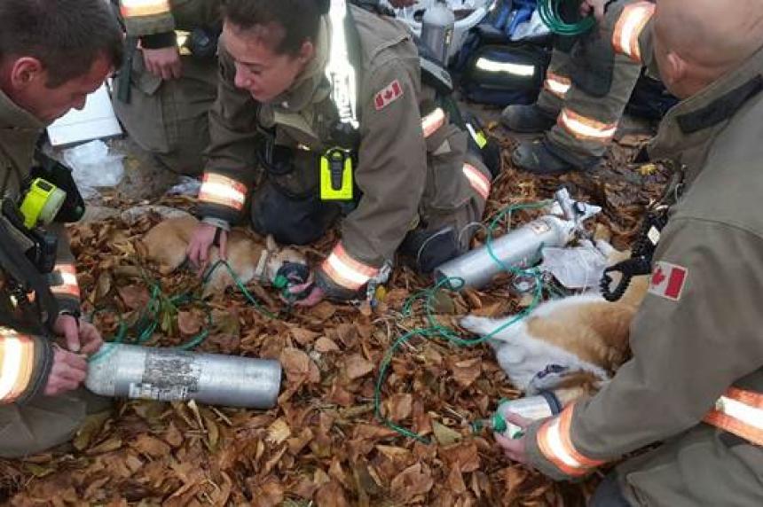 Saskatoon fire crews rescue four dogs from blaze
