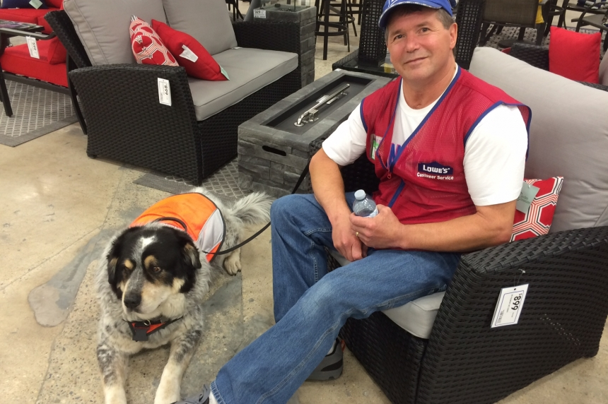 Regina man's service dog welcomed on the job