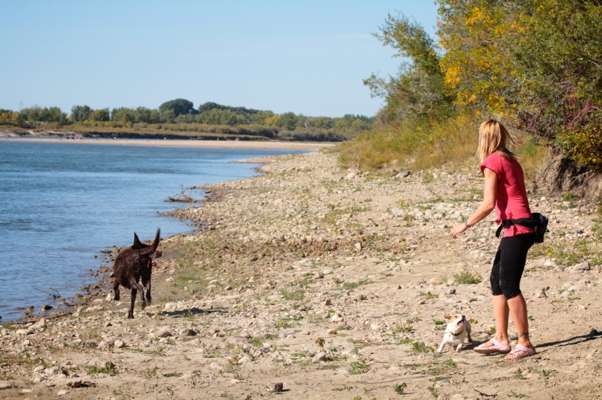 Dog owners growling at new Whitecap Park plan