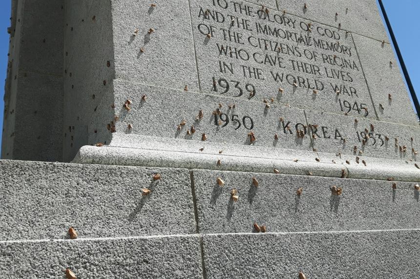 Moths invade Regina, but only live for 5 days