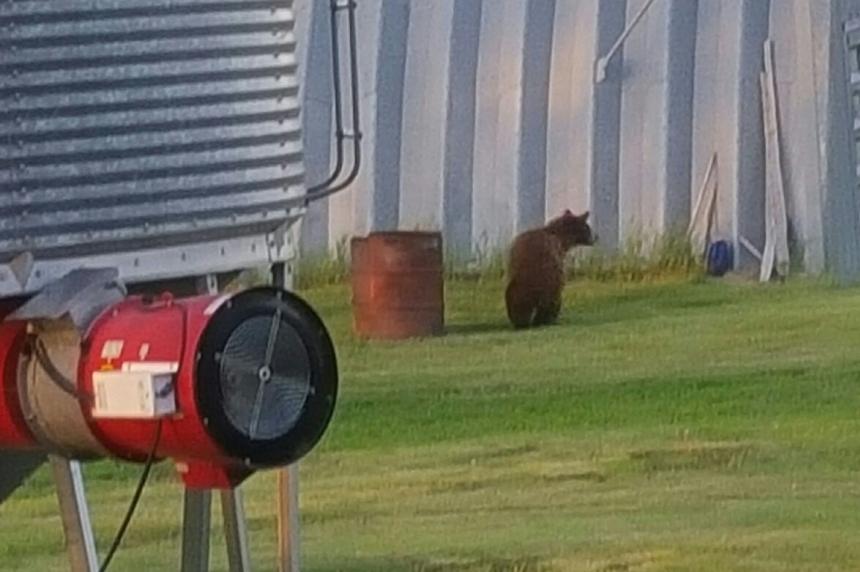 Bear visits family farm outside Craven