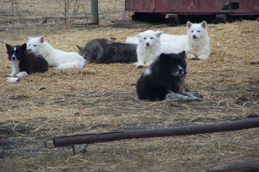 70 dogs seized on farm near Riceton, Sask.