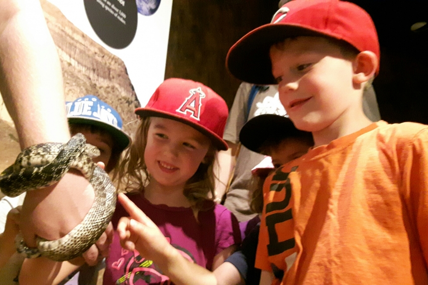 Kids slither down to see the 'Snakes Alive' exhibit in Regina