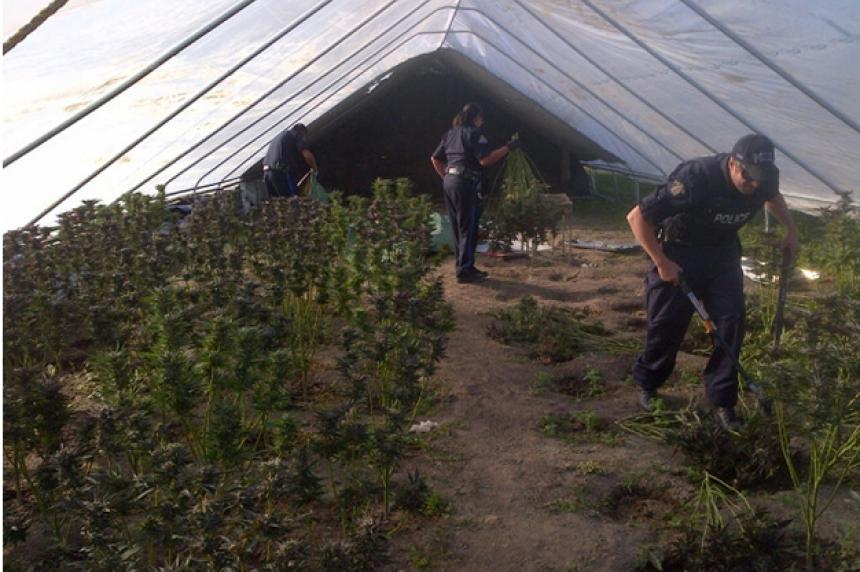 Large grow-op discovered northeast of Regina; over 400 marijuana plants seized