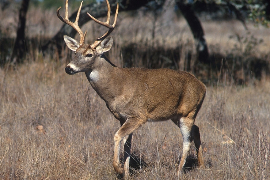 Most Saskatchewan wildlife benefitting from mild winter