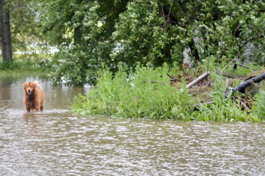 Sask. farmers in flood areas report drowning crops
