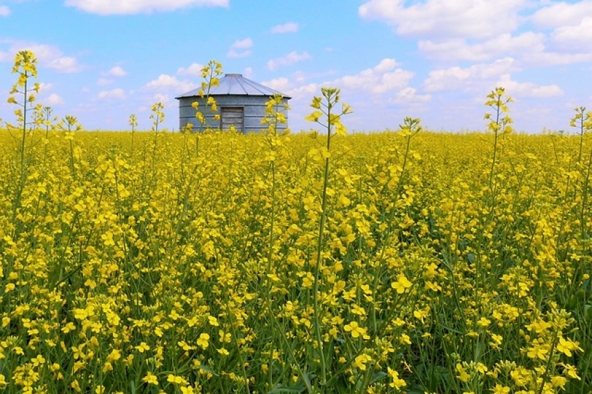 3 Alberta girls dead after suffocating in truck loaded with canola