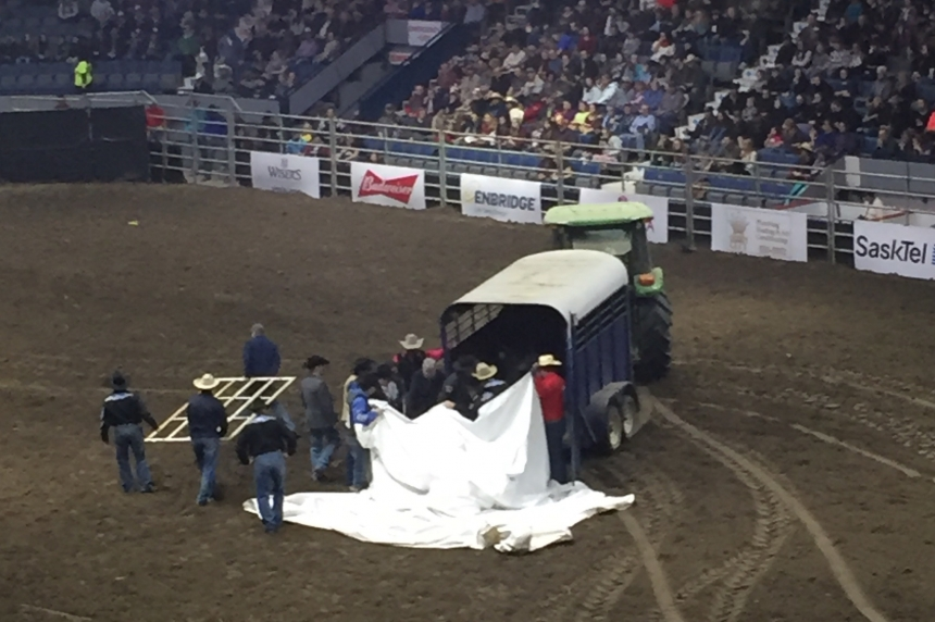 Update: Horse euthanized after neck or spinal injury during Agribition rodeo