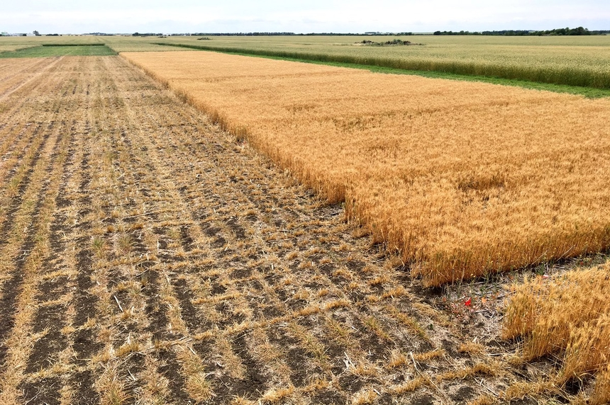 Harvest slightly ahead of 5-year average: crop specialist