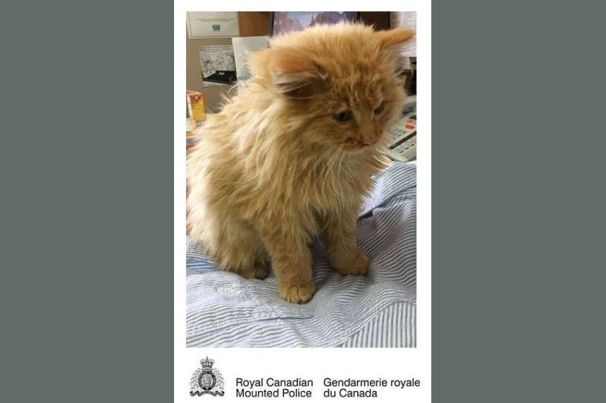 Weyburn RCMP save partially-frozen kitten on highway during blizzard