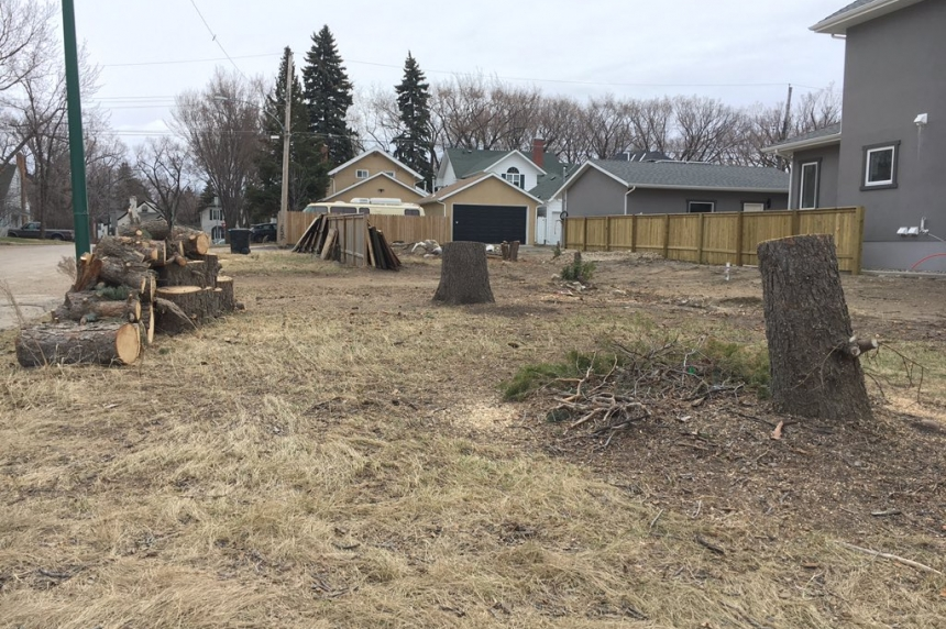 Neighbours angry after city trees cut down