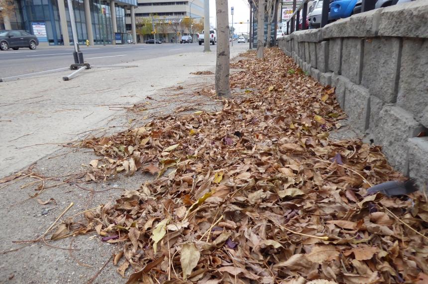 Leaf pickup starting in Regina