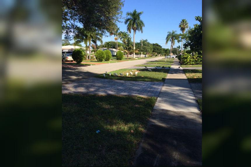 Sask. woman in Florida braces for massive Hurricane Irma