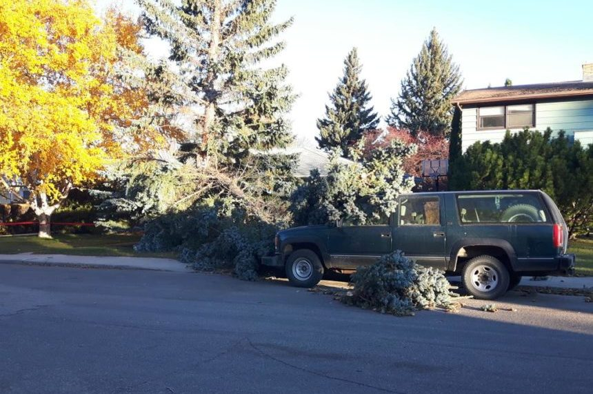 Crews remove a downed tree from a car on Ash Street in Saskatoon on Oct. 18, 2017. (Chris Carr/650 CKOM)