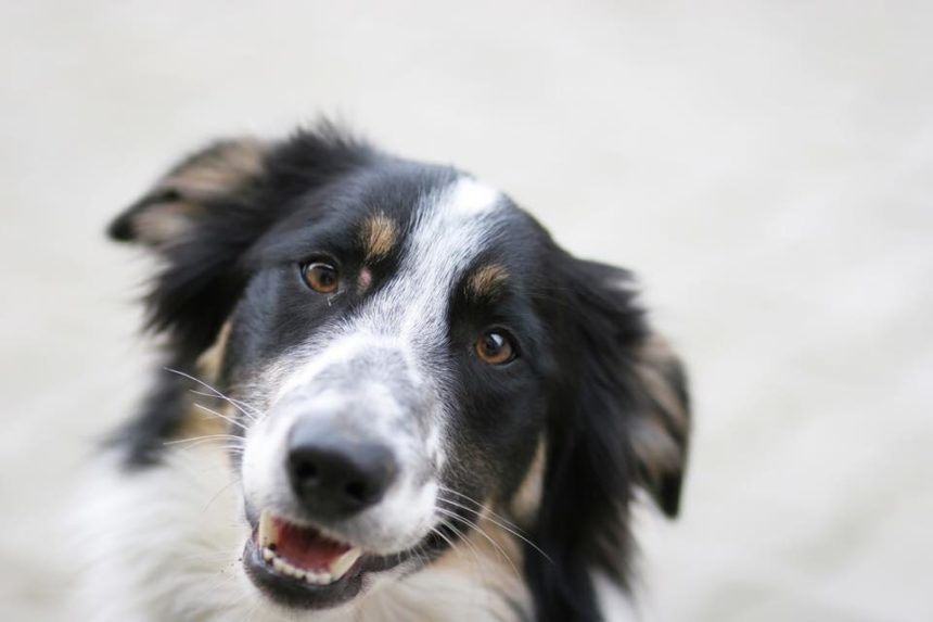 Regina Humane Society launches holiday adoption campaign