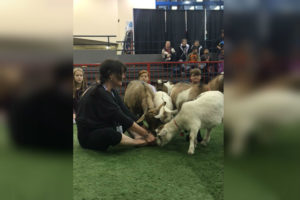 Agribition - Goat Yoga Instructor - Nov 22 2017 web