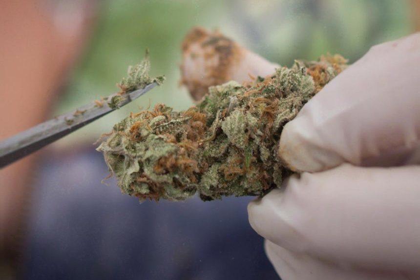 Quebec tables cannabis legislation; provincial body to control industry