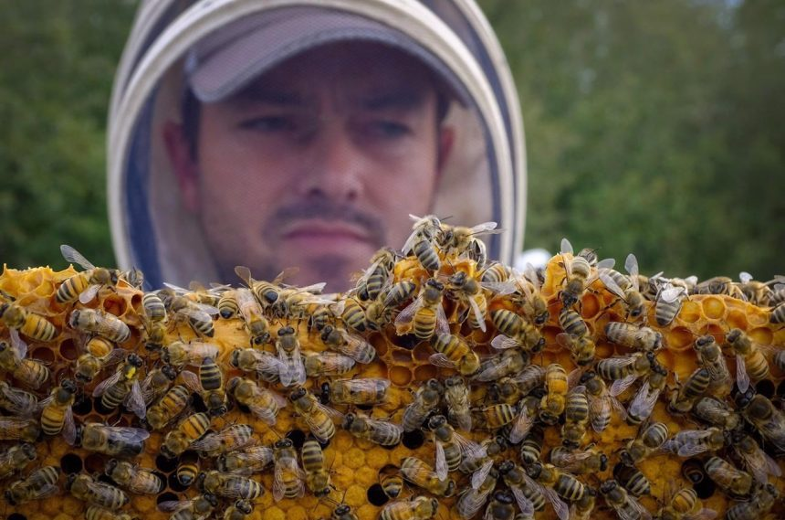 Canada proposes to limit, not ban, use of pesticides that kill bees