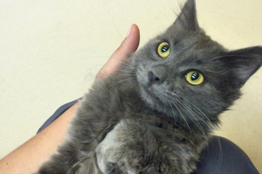 Saskatoon SPCA at capacity for cats, surrenders on hold
