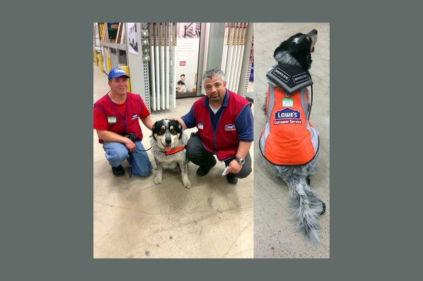 Regina man's service dog welcomed on the job