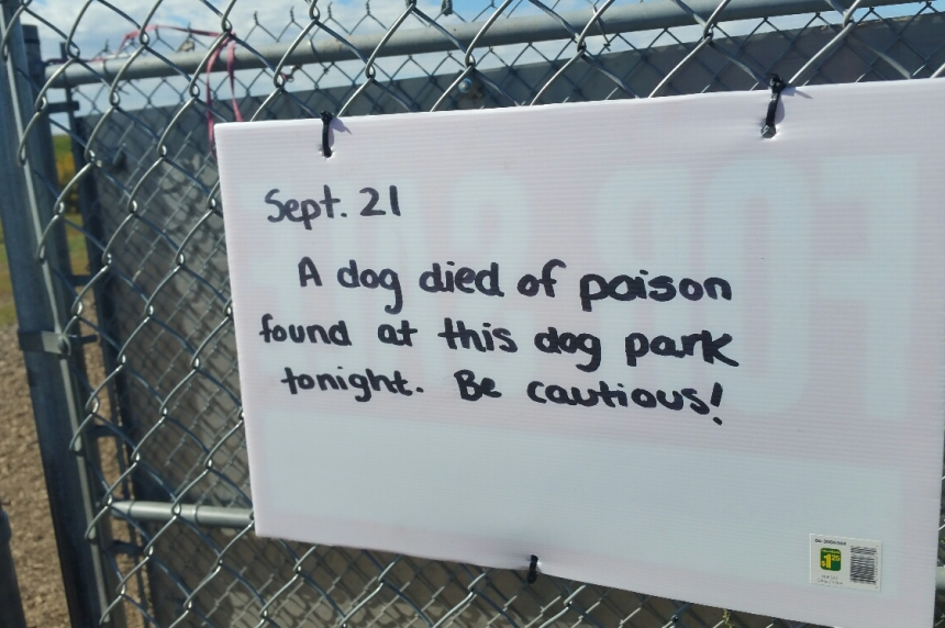 Dog allegedly poisoned in Saskatoon park