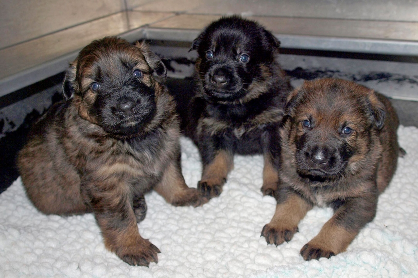 RCMP looking for kids' help naming 13 police puppies