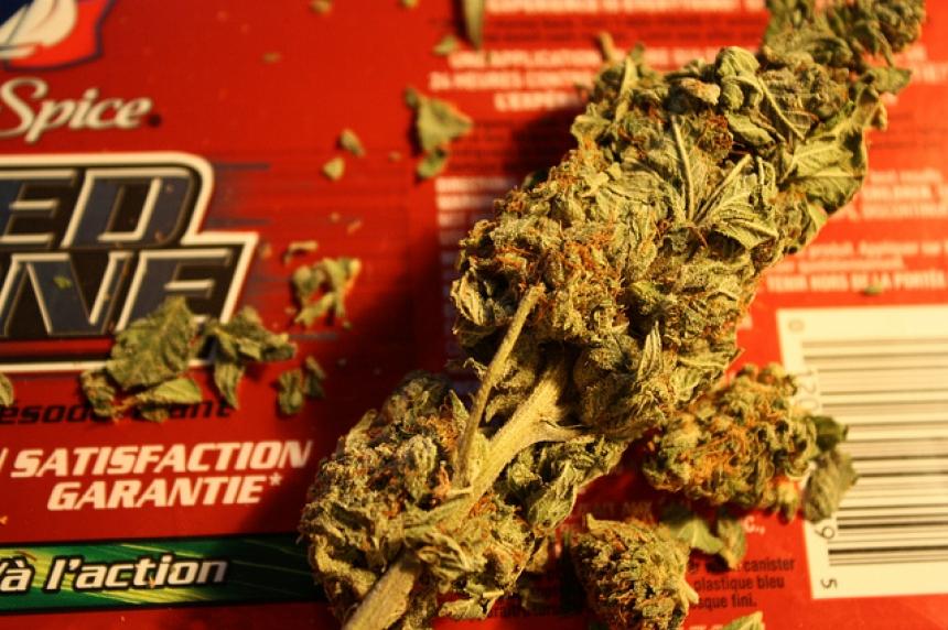 Marijuana activist seeks special business licence in Saskatoon