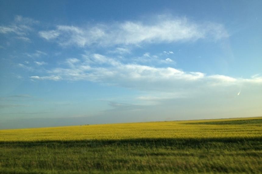 Seeding underway in Sask. despite high moisture in fields