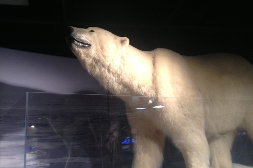 Saskatchewan Science Centre visitors go to Arctic on hottest summer days