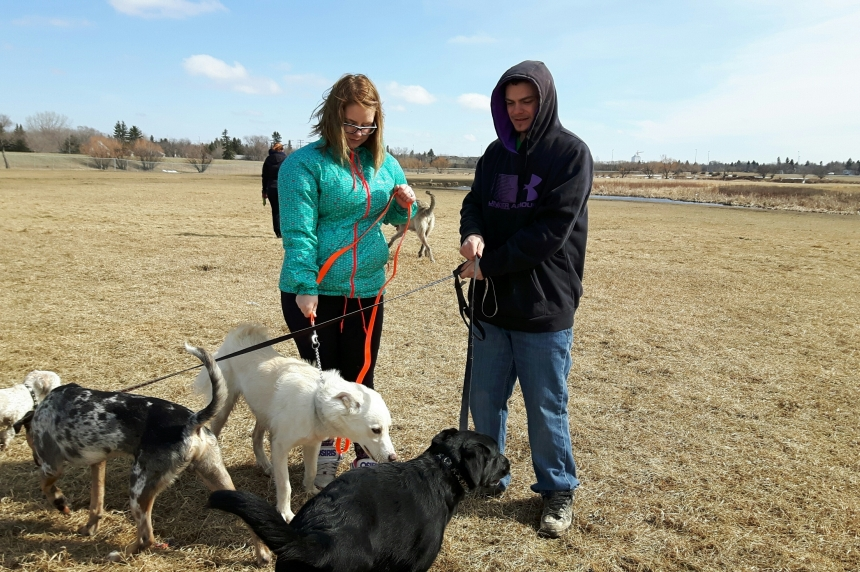 Dog owners support addition of more dog parks in Regina