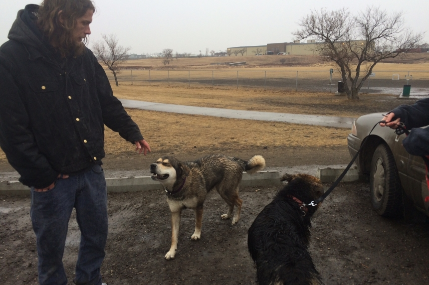 Report calls for more dog parks in Regina
