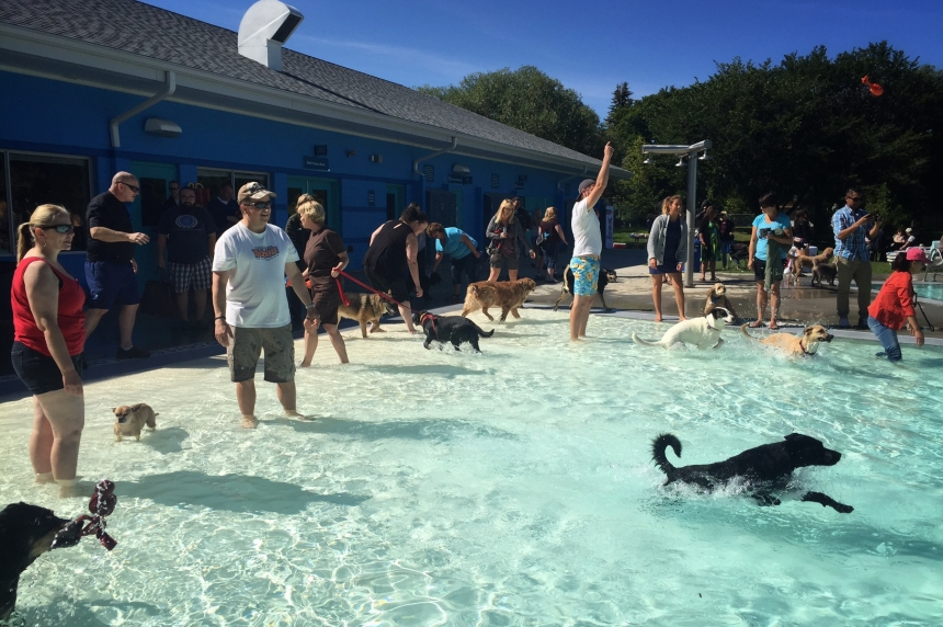 Pets, service animals go swimming on final day for outdoor pools in Saskatoon